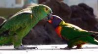 La historia de amor de las aves a cautivado a miles en TikTok.
