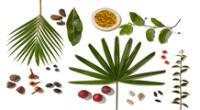 Los frutos de la Amazonía son muy beneficios para la piel.