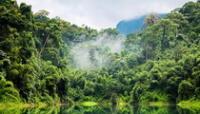 Los bosques proporcionan servicios de un valor incalculable por su biodiversidad.
