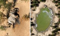 Elefante muerto en reserva
