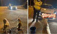 Perritos callejeros junto a policía de buen corazón