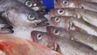 Estamos en Semana Semana Santa y hoy es Viernes Santo por lo que una de las tradiciones mas comunes de todo el mundo es comer pescado.