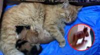 """""""Ella era una gata callejera que deambulaba cerca de aquí. No sabíamos que dio a luz a gatitos"""", indicó el veterinario."""