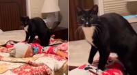 El tierno gatito le dio masajes en la espalda a la pequeña hija de su dueña.