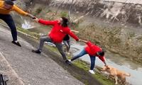 Jóvenes ayudando a perrito a salir del canal