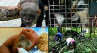 Aprende qué animales pueden ser considerados mascotas.