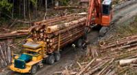 La Unión Europea (UE), en su conjunto, es el segundo mayor importador de deforestación en 2017, con un 16 %.