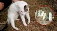 El gato fue entregado a una fundación de ayuda  a los animales para su adopción.