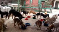 Campaña busca apoyar a albergues de mascotas