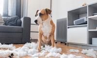 Algunos estímulos provocan comportamientos destructivos en las mascotas.