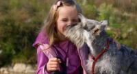 Consulta con un alergólogo antes de adquirir cualquier mascota.