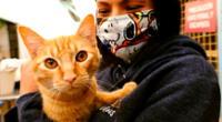 No se sabe si los gatos con coronavirus podrían transmitir el SARS-CoV-2 de forma natural a otros animales o de regreso a los humanos.