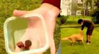 Envenenan a canes en parque de San Borja.