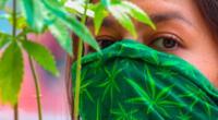 Colectivos marcharon para pedir legislar la marihuana.