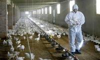 China: confirman el primer caso mundial de la gripe aviar H10N3 en humanos