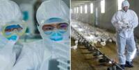 Gripe aviar H10N3: conoce qué es y cómo se contagia en humanos este nuevo patógeno detectado en China.