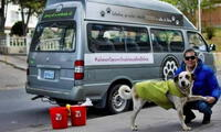 Bolivia: empresario que dejó su vida de lujos para cuidar a 1.500 perros sin hogar muere de COVID-19.