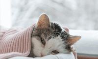 Cuidado con la tos y mucosidad oscura. Recuerda que solo el veterinario puede medicarlo.