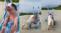 Enternecedor video de los animales llamó la atención en las redes sociales.