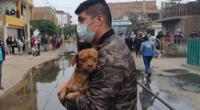 Animalitos recibió primeros auxilios.