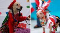 Competirán canes de todo tamaño y raza.