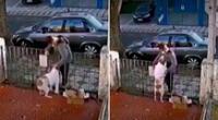 El perrito solo quedó a ver cómo se alejaba el ladrón.