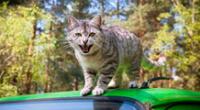 El significado de soñar con gatos que te atacan puede tener varias interpretaciones.
