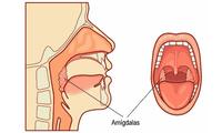 Filtran los agentes patógenos que ingresan por la nariz o boca.