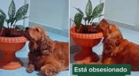 El cachorro no se separa de la planta.