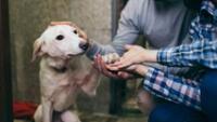 De acuerdo con la Organización Mundial de la Salud (OMS), el 70% de los perros no tiene hogar.