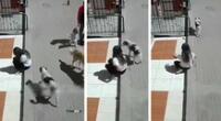 Peculiar video de la joven y el perro se hizo viral en las redes sociales.