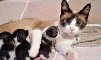 ¡Feliz día peludos de cuatro patas! Los gatos son, para muchos, más que animales de compañía.