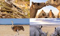 Estos animales se adaptan a las zonas áridas y secas.
