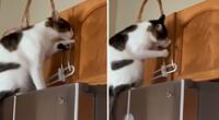 El gatito enterneció las redes sociales