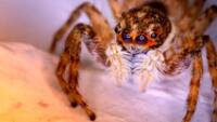 El soñar con arañas no responde a presagio negativo en tu vida.