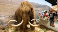 ¿Podrán? El milenario mamut lanudo podría ser resucitado por este grupo de genetistas.