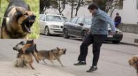 Existen varios motivos por los que un perro puede atacar.