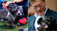 Moon es amante de los perros. Tiene varios canes, incluido a uno que rescató: Tory.