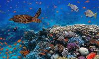 Los océanos contienen el 97% de agua del planeta.