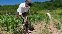 La agricultura es una actividad económica que se realiza desde épocas preincaicas.