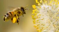 Las interpretaciones sobre soñar con abejas.