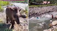 Los niños compartieron un momento de juego con el tapir en el río Kimbiri, en Cusco.