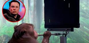 Elon Musk muestra a un mono con chip cerebral jugando un videojuego con el pensamiento [VIDEO]