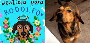 ¡Justicia para 'Rodolfo'! Convocan marcha por perrito asesinado a machetazos en México [VIDEO]