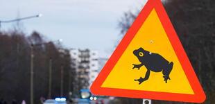 Estonia: ordenan cerrar una carretera para dar libre tránsito a ranas y sapos