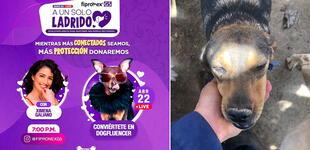 """""""A un solo ladrido"""": campaña social busca incentivar el apoyo a los albergues de perritos"""