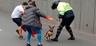 Perrito paraliza el tránsito en Surco tras darse a la fuga: no se dejó alcanzar por nadie [VIDEO]