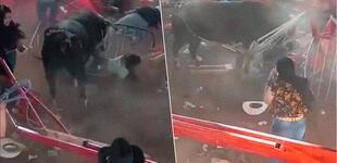 Toro escapa y embiste a multitud en corrida clandestina en México: accidente terminó en balacera