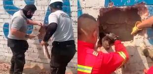 SJL: PNP y bomberos rescatan a perrito atrapado entre dos muros [VIDEO]
