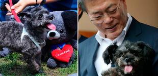 Presidente surcoreano considera prohibir el consumo de carne de perro